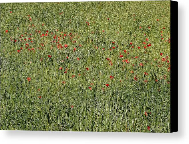 Jez C Self Canvas Print featuring the photograph Field Of Hope by Jez C Self
