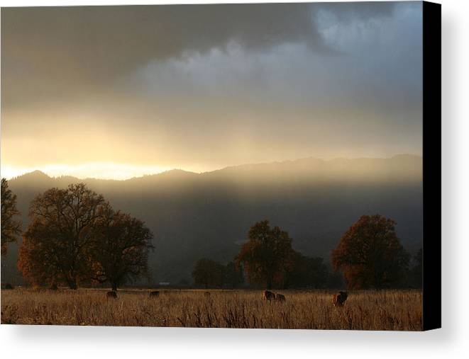 Country Canvas Print featuring the photograph Fields Of Gold by Holly Ethan