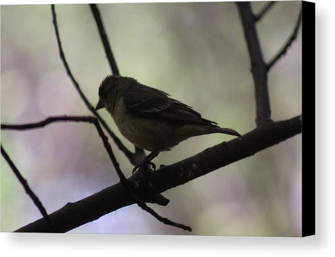 Bird Canvas Print featuring the photograph Finch Shadow 042814a by Edward Dobosh