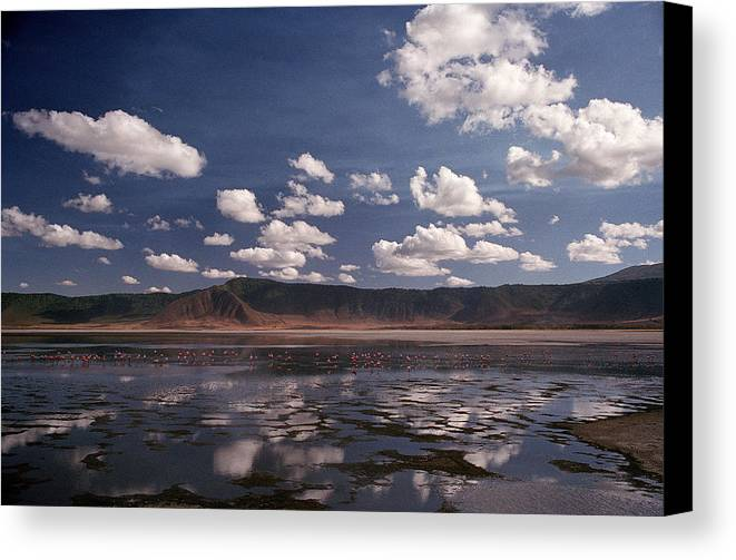 Ngorongoro Crater Canvas Print featuring the photograph Flamingos by Marcus Best