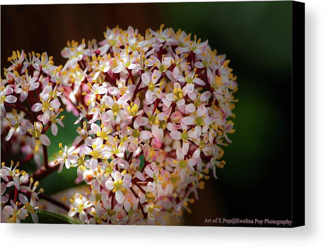 Flower Canvas Print featuring the photograph Flower by Ewelina Pop