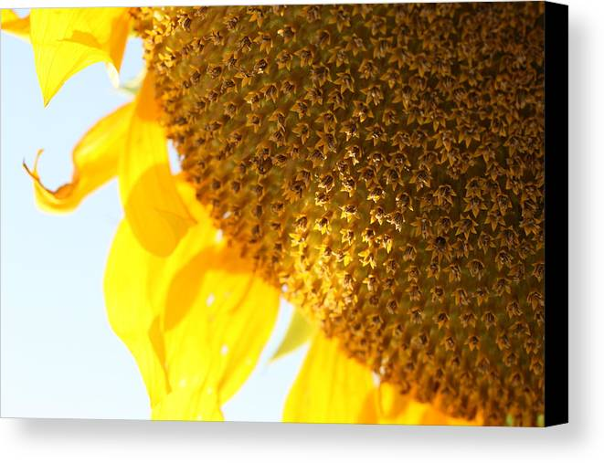 Sun Canvas Print featuring the photograph Flower Of The Sun by Karen Fowler