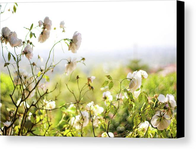Flowers Canvas Print featuring the photograph Flower Valley by Allison Weeks