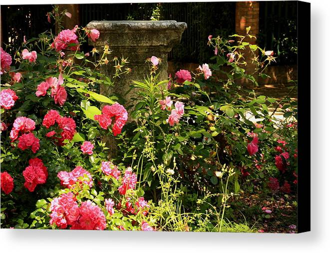 Venice Canvas Print featuring the photograph Flowers In Garden In Venice by Michael Henderson