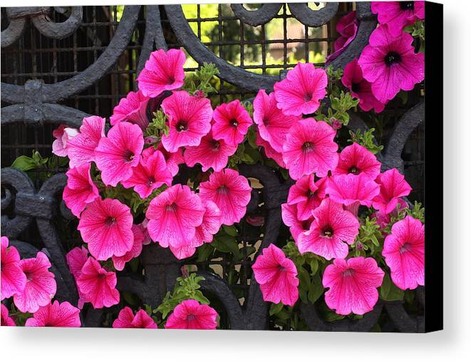 Flowers Canvas Print featuring the photograph Flowers On Iron Grate In Venice by Michael Henderson