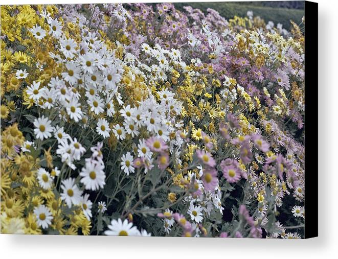 Flowers In Fall Canvas Print featuring the photograph Flowers by Wes Shinn