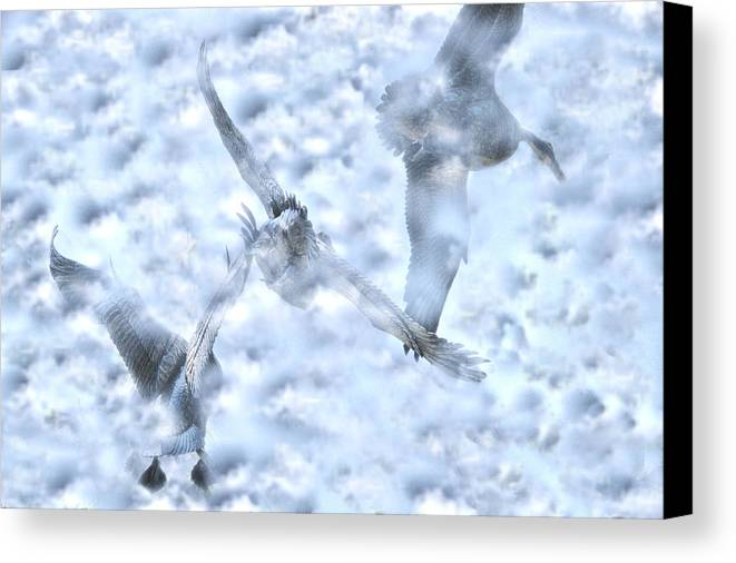 Flying Canvas Print featuring the photograph Flying Blind by Dennis Sullivan