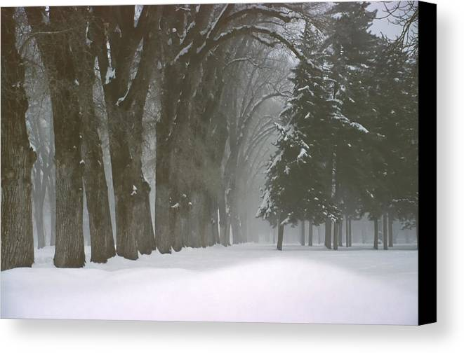 Trees Canvas Print featuring the photograph Foggy Morning Landscape 6 by Steve Ohlsen