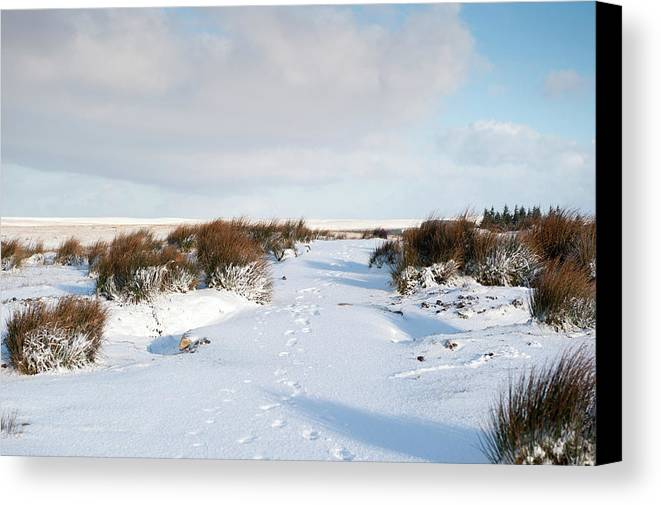 Winter Canvas Print featuring the photograph Footprints In The Snow Iv by Helen Northcott
