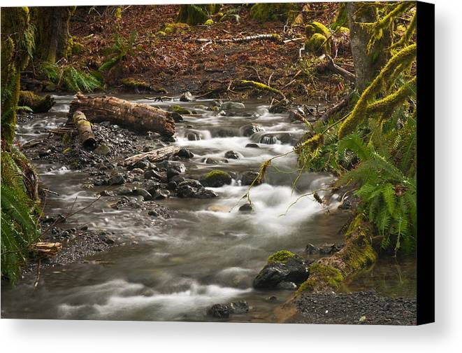 River Canvas Print featuring the photograph Forest Creek by Chad Davis