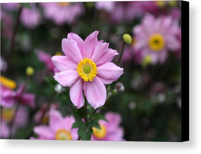 Flowers Canvas Print featuring the photograph Fresh Field Flowers by Pierre Leclerc Photography