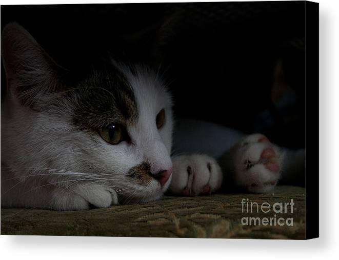 Cat Canvas Print featuring the photograph Frodo by Marta Grabska-Press