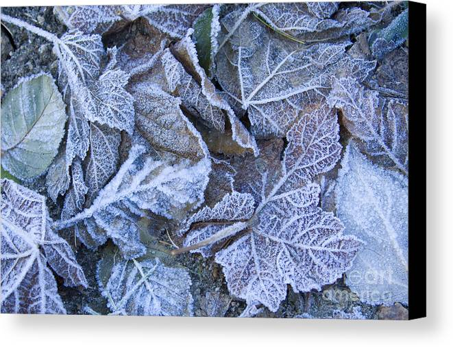Frost Canvas Print featuring the photograph Frost by Idaho Scenic Images Linda Lantzy