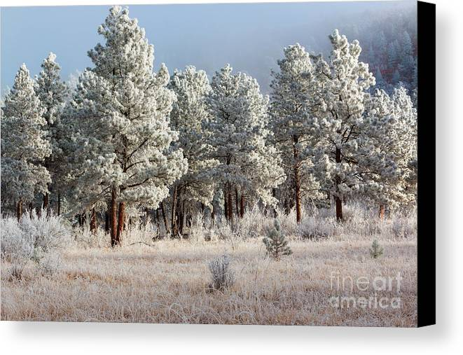 Pikes Peak Canvas Print featuring the photograph Frosty Pikes National Forest by Steve Krull