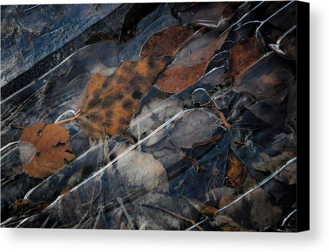 Leaves Canvas Print featuring the photograph Frozen Leaves In Fall by Jonathan Hansen