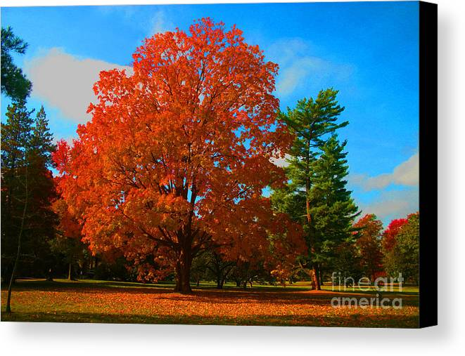 Fall Canvas Print featuring the photograph Get The Rake by Dennis Curry