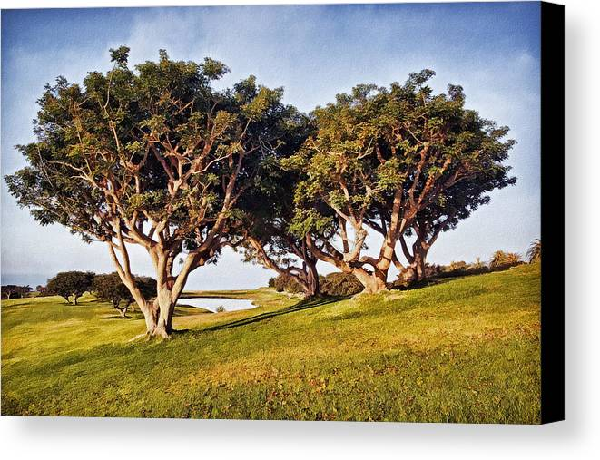 Trees Canvas Print featuring the photograph Glory In The Morning Pntb by Theo O'Connor