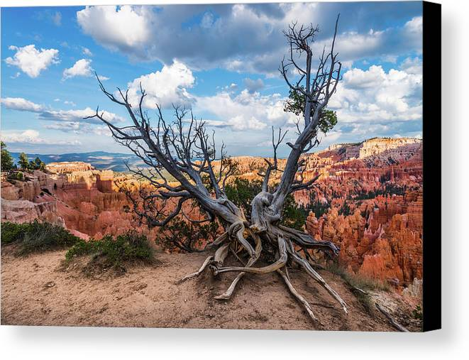Bryce Canyon Canvas Print featuring the photograph Gnarly - Bryce Canyon by Justin Bowen