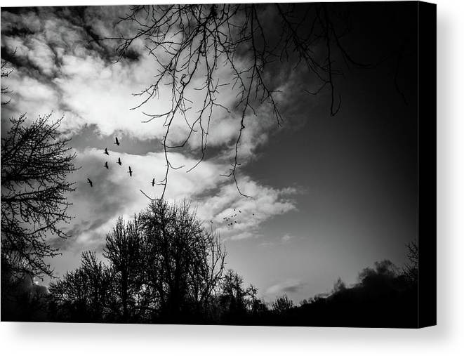 Geese Canvas Print featuring the photograph Going Home by Kristen Wilcox