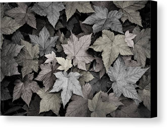Beautiful Photos Canvas Print featuring the photograph Gold Copper And Silver Leaves 1 by Roger Snyder