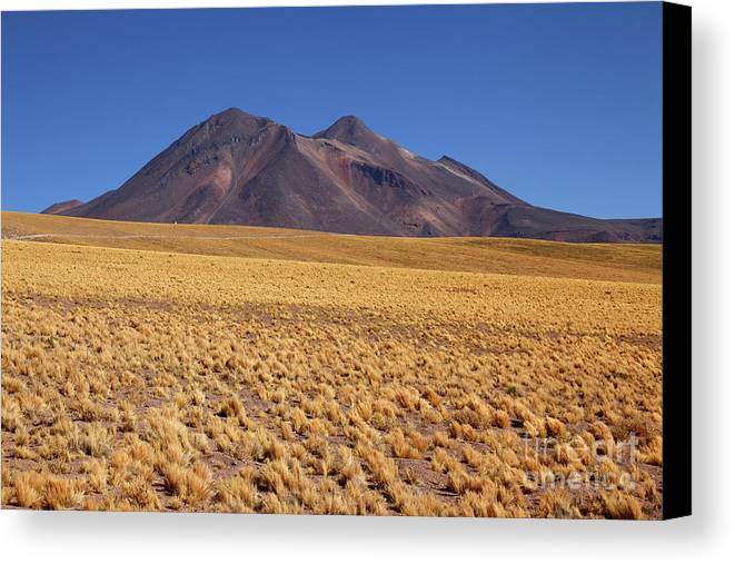 Chile Canvas Print featuring the photograph Golden Grasslands And Miniques Volcano Chile by James Brunker