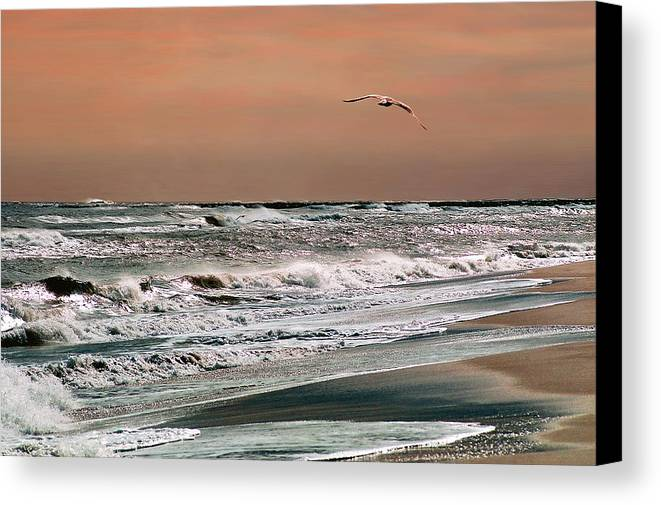 Seascape Canvas Print featuring the photograph Golden Shore by Steve Karol