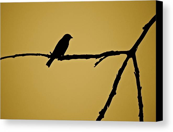 Bird Canvas Print featuring the photograph Goldfinch by Diana Hatcher