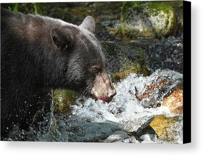 Bear Canvas Print featuring the photograph Gone Fishin' by Joy McAdams