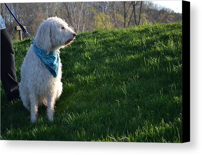 Dogs Canvas Print featuring the photograph Good Side by Monica Lyons