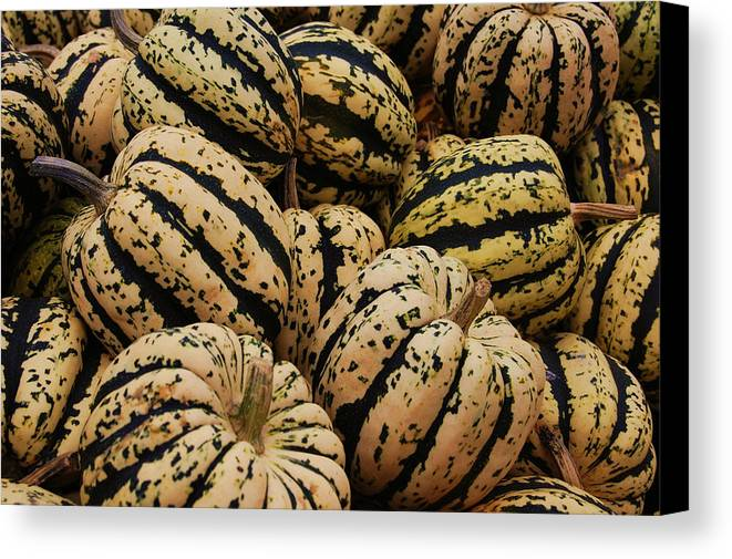 Squash Canvas Print featuring the photograph Gourds In White And Green by Jame Hayes