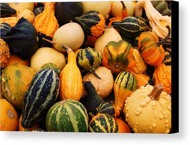 Squash Canvas Print featuring the photograph Gourds by Jame Hayes