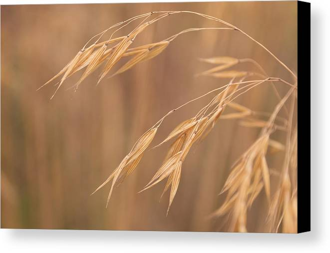 Stipa Canvas Print featuring the photograph Grass In The Wind by Monika Tymanowska