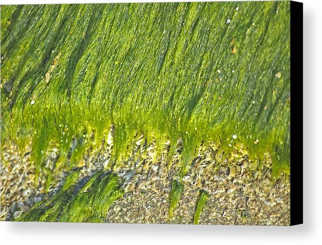 Algae Canvas Print featuring the photograph Green Algae On Rock by Kenneth Albin