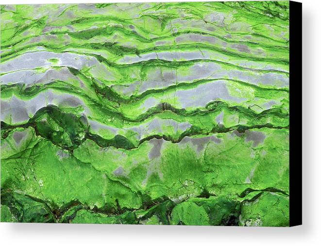Horizontal Canvas Print featuring the photograph Green Algae Patterns On Exposed Rock At Low Tide, Gros Morne National Park, Ontario, Canada by Altrendo Nature