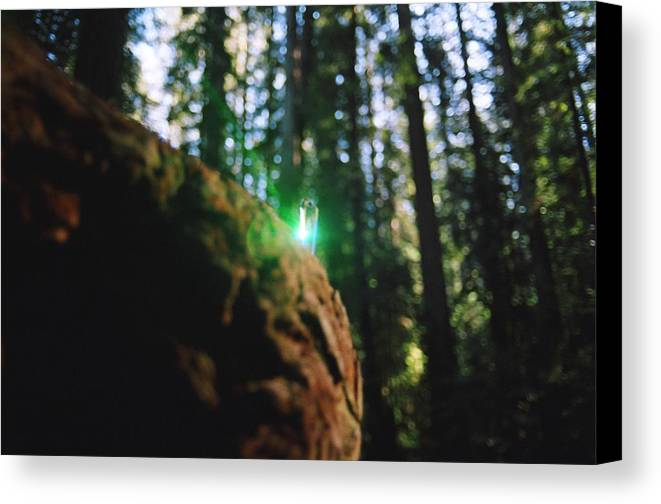 Burl Canvas Print featuring the photograph Green Burl by Steven Wirth