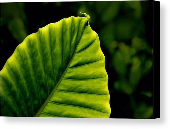 Leaf Canvas Print featuring the photograph Green Leaf by Lyle Huisken