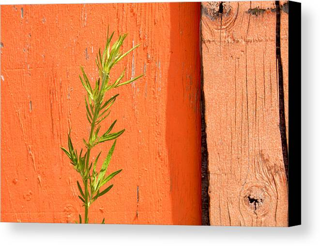 Color Canvas Print featuring the photograph Green On Orange 2 by Art Ferrier