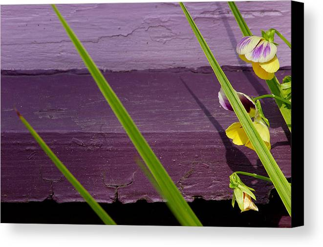 Abstract Canvas Print featuring the photograph Green On Purple 6 by Art Ferrier