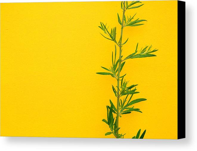 Color Canvas Print featuring the photograph Green On Yellow 5 by Art Ferrier