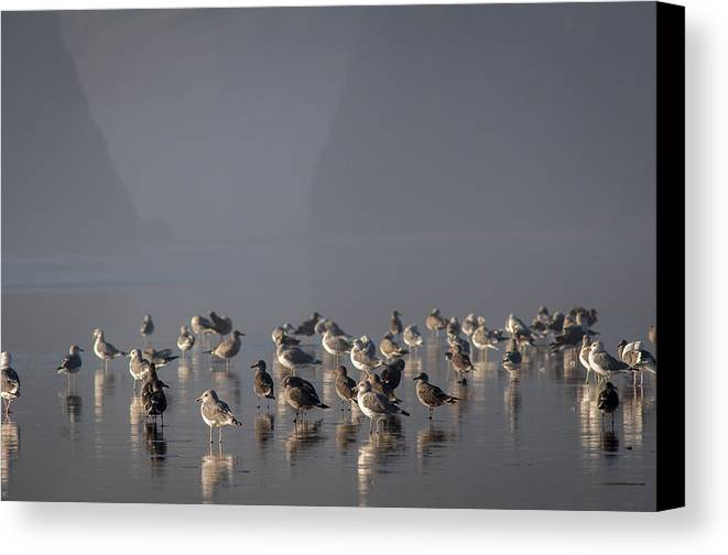 Beaches Canvas Print featuring the photograph Gulls On A Foggy Beach by Robert Potts