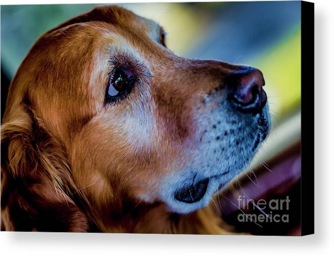 Gus Canvas Print featuring the photograph Gus As Photo Assistant 3504 by Doug Berry