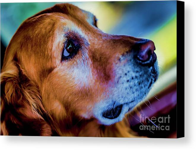 Gus Canvas Print featuring the photograph Gus As Photo Assistant 3504t2 by Doug Berry