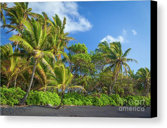 America Canvas Print featuring the photograph Hana Palm Tree Grove by Inge Johnsson