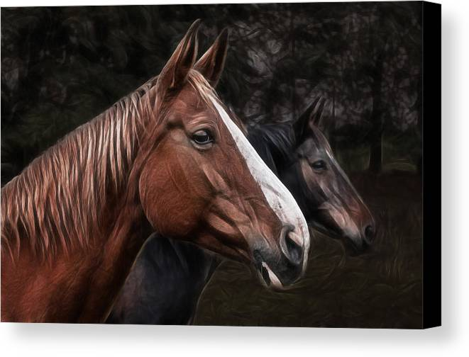 Horse Canvas Print featuring the photograph Hanoverians by Joachim G Pinkawa
