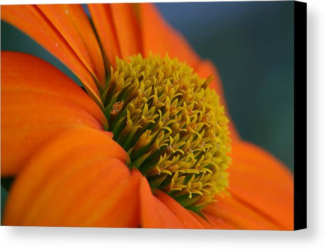 Orange Flower Canvas Print featuring the photograph Happy by Linda Russell