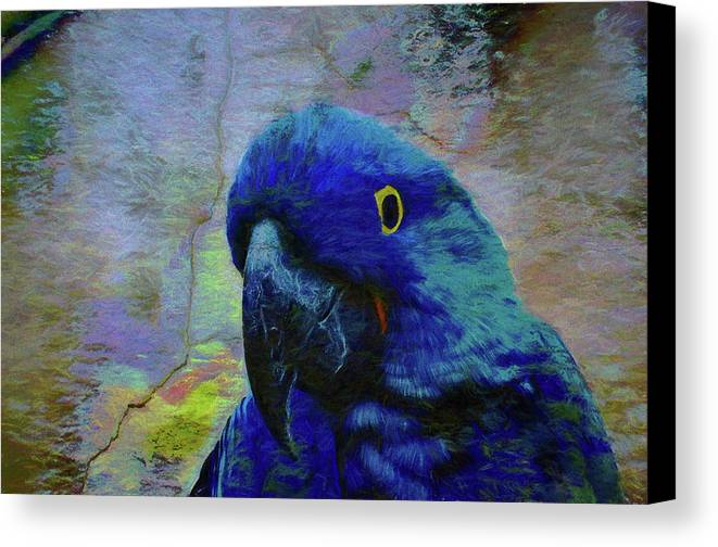 Birds Canvas Print featuring the photograph He Just Cracks Me Up by Jan Amiss Photography