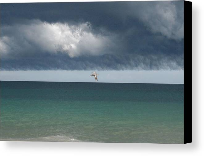 Pellican Canvas Print featuring the digital art Heading For Cover by Michael Vanatta