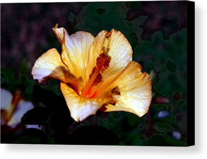 Nature Canvas Print featuring the photograph Hibiscus Heat by David Houston
