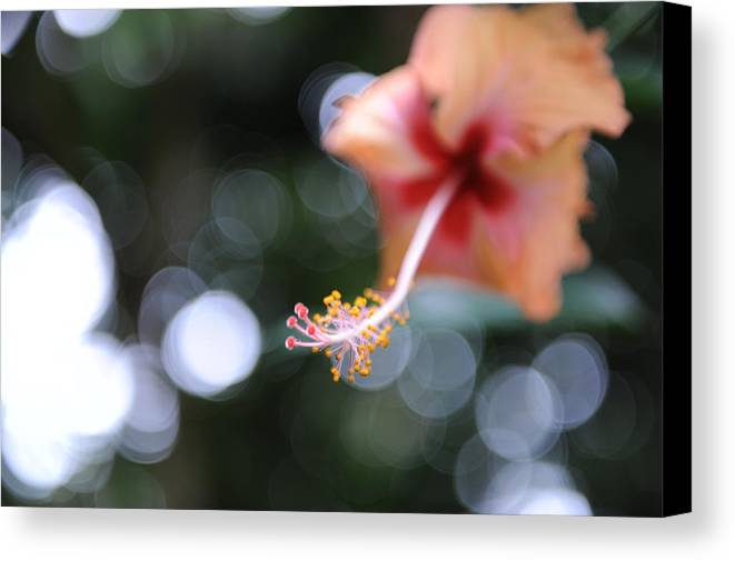 Hibiscus Canvas Print featuring the photograph Hibiscus by Jessica Rose