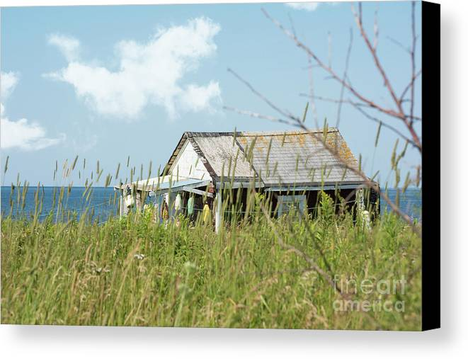 Fishing Canvas Print featuring the photograph Hidden By The Grass by Judy Tomlinson